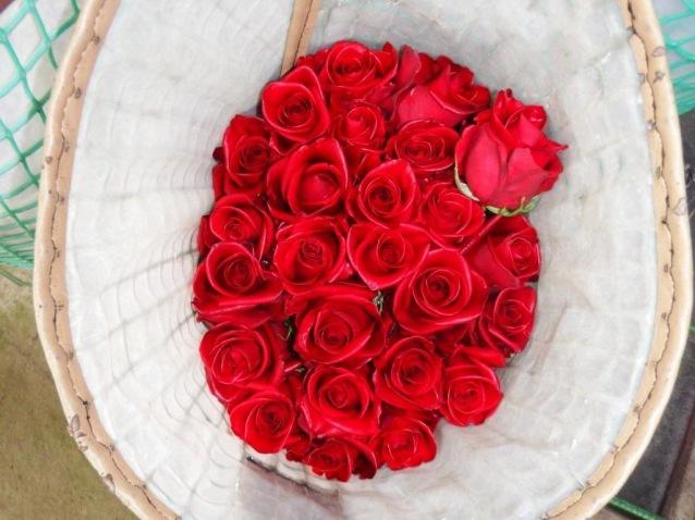 roses at Nevado
