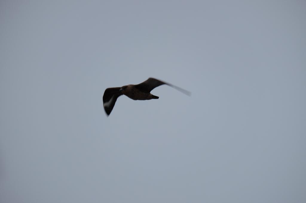 Stella Day 2 sea bird flight copy