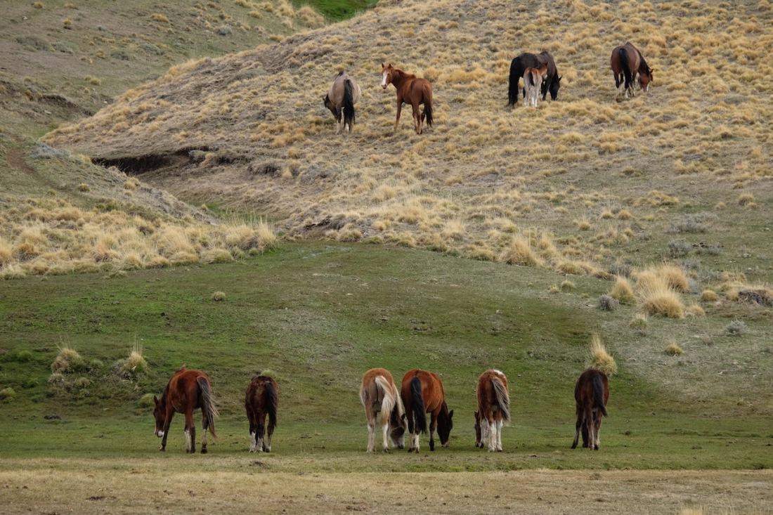 Baguales horses resize.jpg