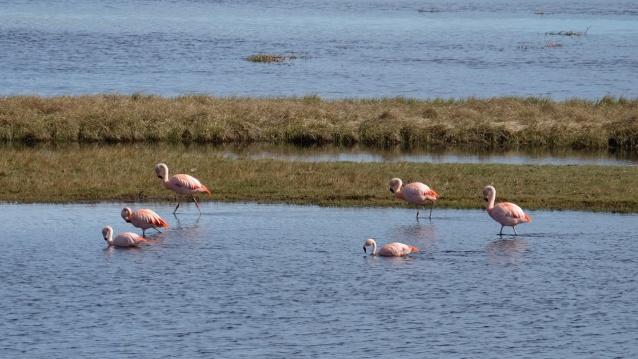 Calafate depart flamingos resize.jpg
